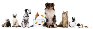 Pet Loss Counseling